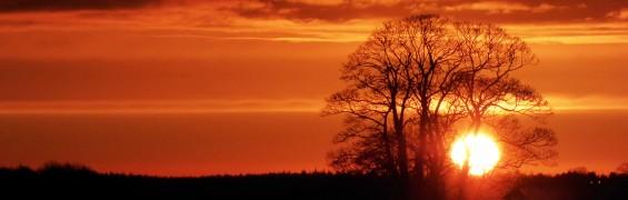 three sycamores sunrise (7)
