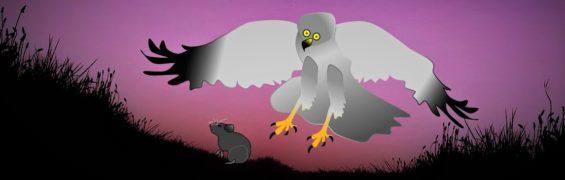 hen harrier going for vole